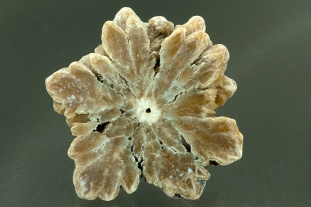 Barite Stalagmite -  cross-section