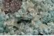 Hemimorphite, Willemite & Cerussite